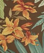 Canopy Palm